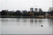TQ3377 : Lake, Burgess Park by N Chadwick