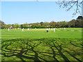 TF1863 : Cricket in Jubilee Park : Week 17