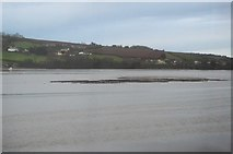 SX9272 : Mussel beds, River Teign by N Chadwick