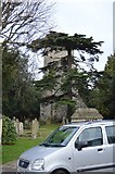 TQ2262 : Church of St Mary and tall tree by N Chadwick