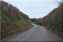 SX8057 : A quiet Devon lane by N Chadwick