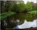 SD6709 : Lake near Old Hall Farm by Philip Platt