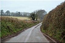 SX8058 : Quiet Devon lane by N Chadwick
