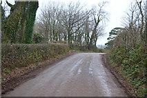 SX8058 : Rural Devon lane by N Chadwick