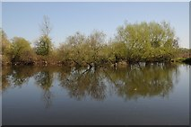 SO8352 : Pool beside the River Teme by Philip Halling