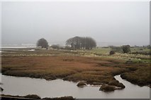 SX9779 : Salt marshes, Dawlish Warren by N Chadwick
