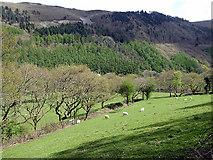 SN7079 : Cwm Rheidol pasture by John Lucas