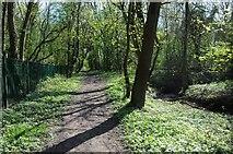 SO8552 : Footpath beside Duck Brook by Philip Halling