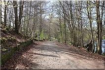 NS3421 : River Ayr Walk by Billy McCrorie
