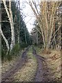 NH6252 : Trackbed on former Black Isle Railway Line by valenta