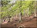 SJ3819 : Woodland in Spring : Week 18