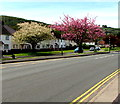 ST2589 : Late April blossom in Pontymister by Jaggery