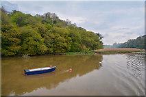 SX4268 : West Devon : The River Tamar by Lewis Clarke