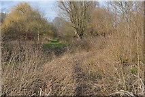TQ2067 : Dense undergrowth by N Chadwick