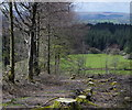 SN8438 : Felled area and line of beech trees above Cwm-coed-oeron by Andrew Hill