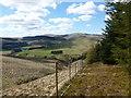 NO0103 : Plantation edge on Lendrick Hill by Alan O'Dowd