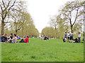 TQ2880 : Green Park on Marathon day by Stephen Craven