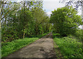 TL5677 : Along Nornea Lane by John Sutton