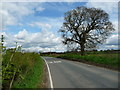 SE6654 : Roadside tree, Holtby Lane by Christine Johnstone