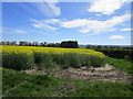 NZ0915 : Oilseed rape near Sledwich by Jonathan Thacker