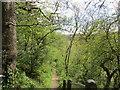 NZ1014 : Footpath to Whorlton Bridge from Whorlton by Jonathan Thacker