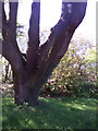 SN0215 : St John's Church, Slebech - now closed - large tree by welshbabe