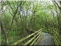 TQ3686 : Boardwalk at Waterworks Nature Reserve by PAUL FARMER