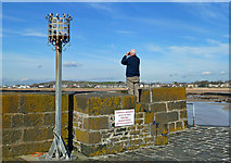 NT4999 : Birdwatching At Elie Harbour by Mary and Angus Hogg