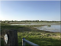 TL5392 : Receding flood water - The Ouse Washes by Richard Humphrey