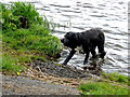"""H2247 : """"Snooky"""" wants another stick thrown into the water! by Kenneth  Allen"""