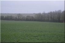 TR2254 : Pasture near Adisham by N Chadwick