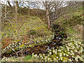 NH8072 : Butterbur below a waterfall next to the B9175 by valenta