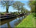 SJ8317 : Narrowboats moored along the Shropshire Union Canal by Mat Fascione