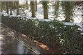 SX8964 : Snow and ivy, Cockington valley by Derek Harper