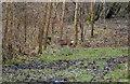 ST8281 : Roe Deer, Alderton Grove, nr Alderton, Wiltshire 2009 by Ray Bird