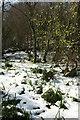 SX8963 : Snow, Cockington valley by Derek Harper