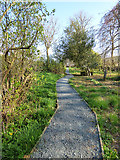 SD9772 : St Mary's church Kettlewell - new churchyard path by Stephen Craven