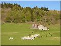 SD9771 : Animals' tea party below Crookacre Barn by Stephen Craven