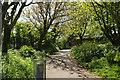 SX8962 : Path, Hollicombe Park by Derek Harper