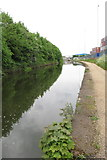 SJ7996 : Trees and containers by the Bridgewater Canal by Philip Jeffrey