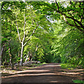 TQ4095 : Track in Long Hills, Epping Forest by Roger Jones