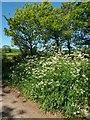 ST0106 : Cullompton: by Colebrooke Lane by Martin Bodman