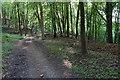SU7497 : Path in Aston Wood by Bill Boaden