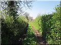 SJ5167 : Back Lane, Kelsall by Jeff Buck