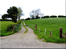 H5375 : Gate and lane, Fernagh by Kenneth  Allen