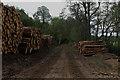 NH5241 : Log Stacks near Belladrum Farm by Chris Heaton