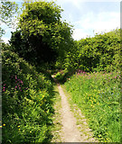 SX5646 : South West Coast Path above Centry Wood by Martin Bodman