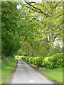 NY4738 : A neatly trimmed beech hedge by Oliver Dixon