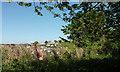 SX9264 : Safety fence by path, Warberry Copse by Derek Harper