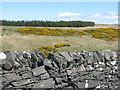 NR2358 : Looking across Gleann Mòr by M J Richardson